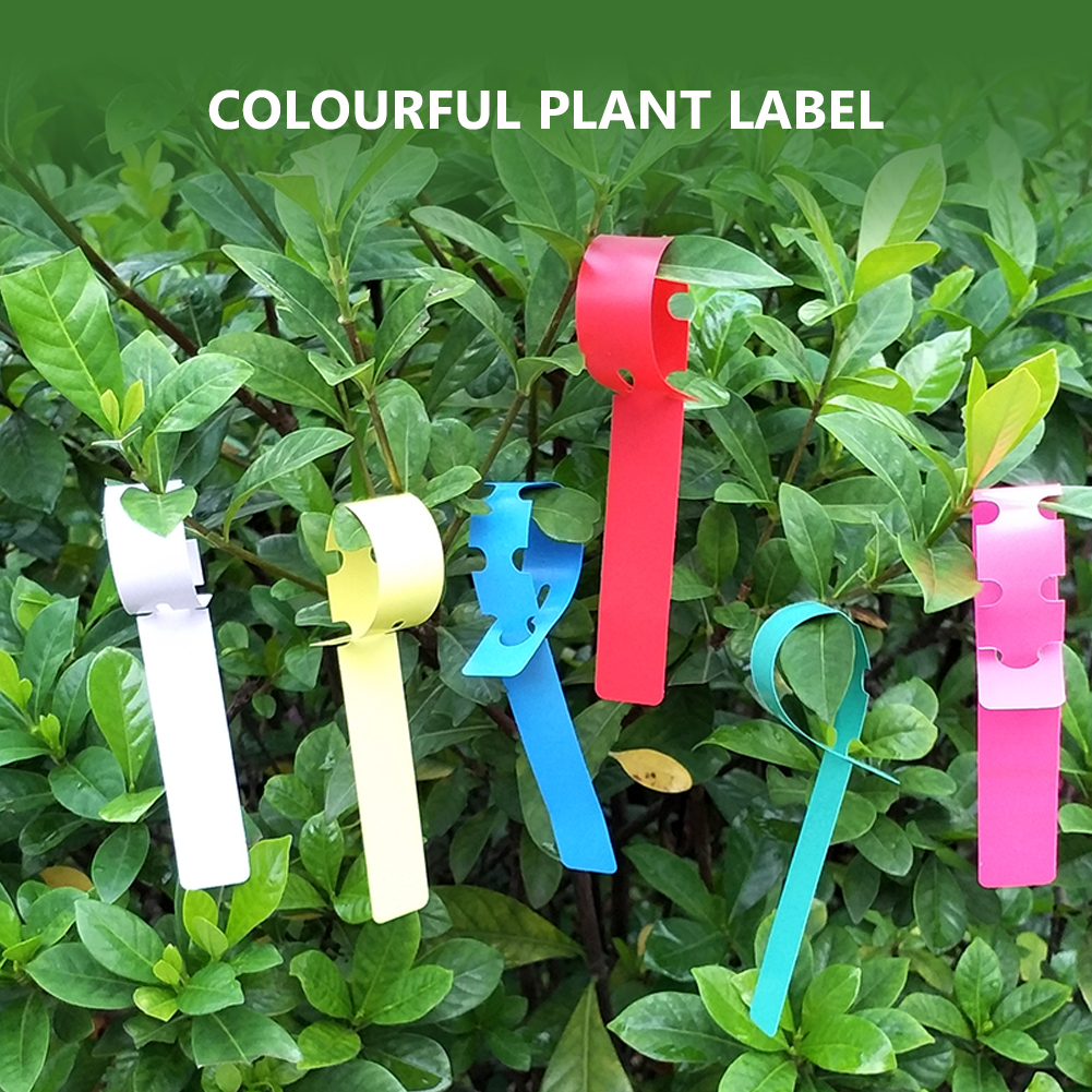 100 300pcs Plastic Plant Tags Labels Colored Marker Market For Garden Nursery Gardening Labeling In Markers From Home On