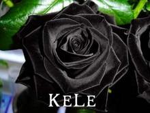 Buy  re Black Rose Flower Seeds For Garden Home  online