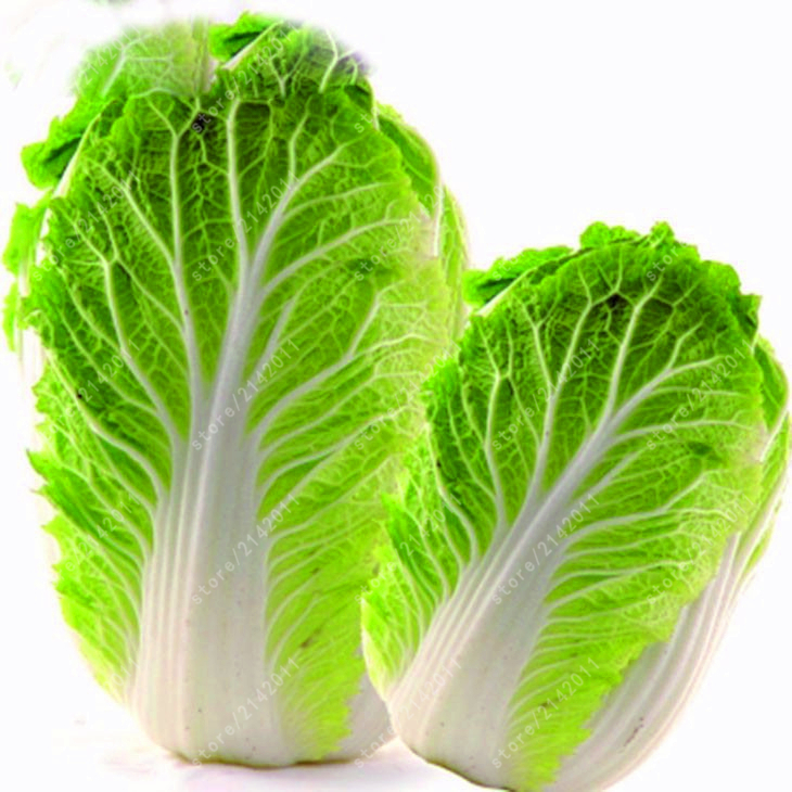 200pcs/bag big cabbage seeds,Golden Cabbage,Nutritious and Delicious seeds vegetables Easy to Grow potted plant for home garden