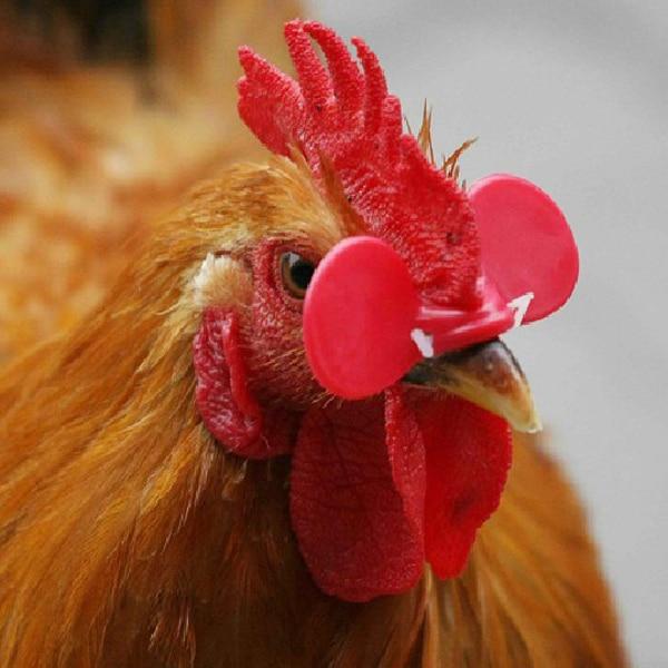 20PCS Creative Chicken Eyes Glasses Avoid Hen peck each other chicken farm