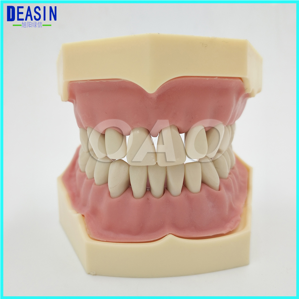 Dental Soft Gum Removable 28PCS Teeth Model Typodont Compatible NISSIN 200 And KAVO Head Model