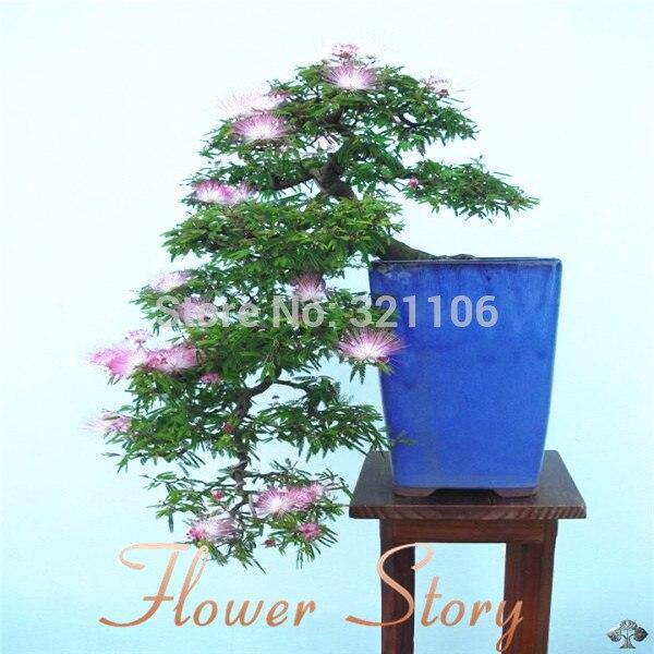 Free Shipping 10 Albizia Julibrissin Tree Mimosa Persian Silk Tree Seeds Gorgeous Diy Home Garden Bonsai Garden Banner Bonsai Seedlingsgarden Pickaxe Aliexpress