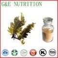 Natural extracto de Algas Pardas 40% Fucoxantina