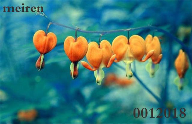 Campanula Flower Seeds (1000 Pieces)
