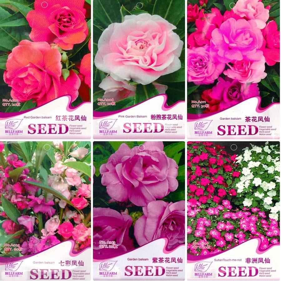Bellfarm Garden Balsam Impatiens Balsamina Bonsai Flowersred Pink