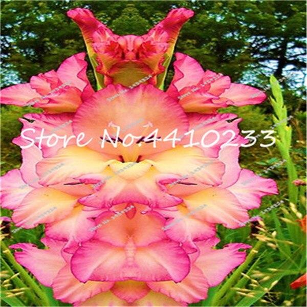 Gladiolus by Doreen.