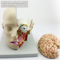CMAM/12401 Head Dissection 4 Parts , Medical Brain Anatomical Human Model
