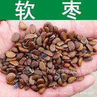 tree seeds collected milk  soft jujube seed Prune Persimmon Diospyros wild jujube seed real shot 200g / Pack