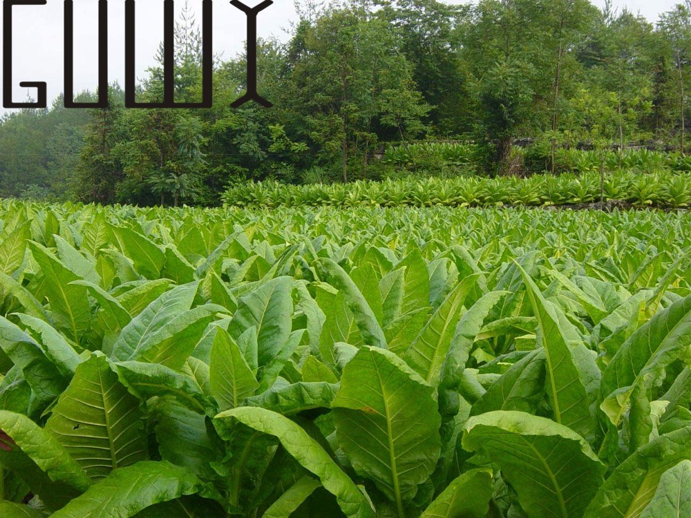 Online buy wholesale happy pipes from china happy pipes for Ornamental vegetable plants