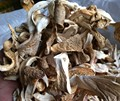 Hot sale 0.4kg Oyster Mushroom from China wholesale & For Oyster polysaccharide extract material