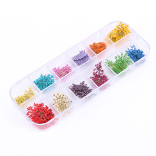 12 Colors Real Nail Dried Flower Nail Art Stickers Tips Decoration With Case Small Flowers Fashion Nail styling  Hot