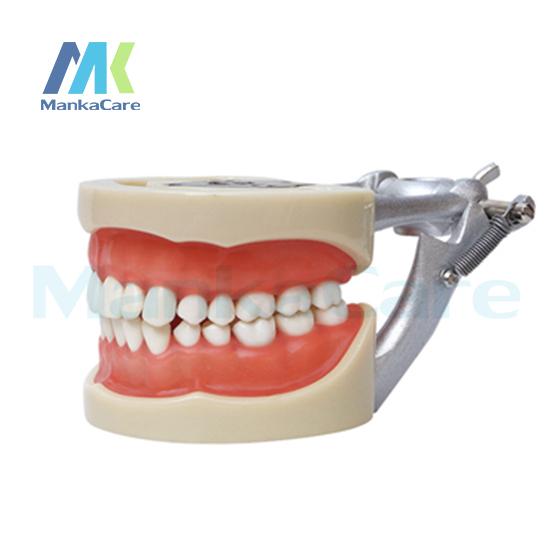 Manka Cuidar-Modelo Padrão/32 pcs Dente/Goma Macia/Parafuso fixo/DP Articulador Oral Modelo Modelo de Dente dentes