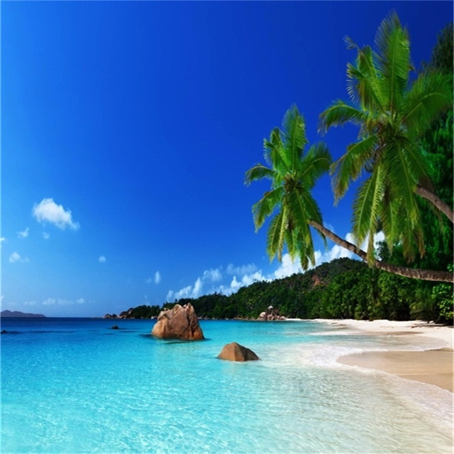 Palm Tree Beach: Laeacco Holiday Party Blue Sky Seaside Beach Palm Tree