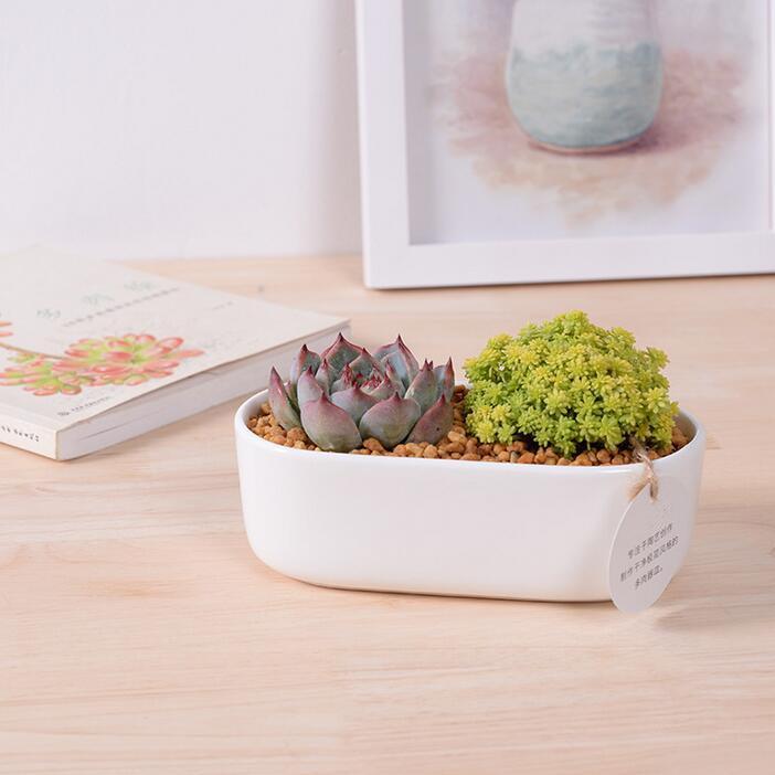 hot sale rectangular round edge ceramic flower pot white