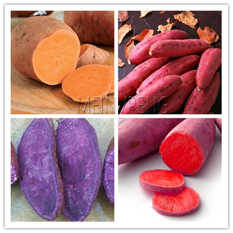 200pcs Purple Sweet Potatoes Bonsai Ipomoea Batatas Delicious Ingredients Organic Non GMO Vegetable For Farm Planting