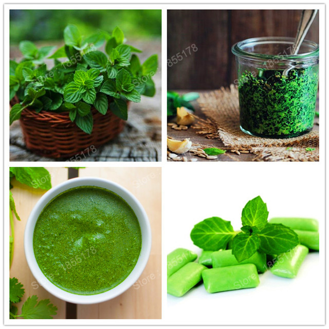 Popüler tıbbi bitki-Nane