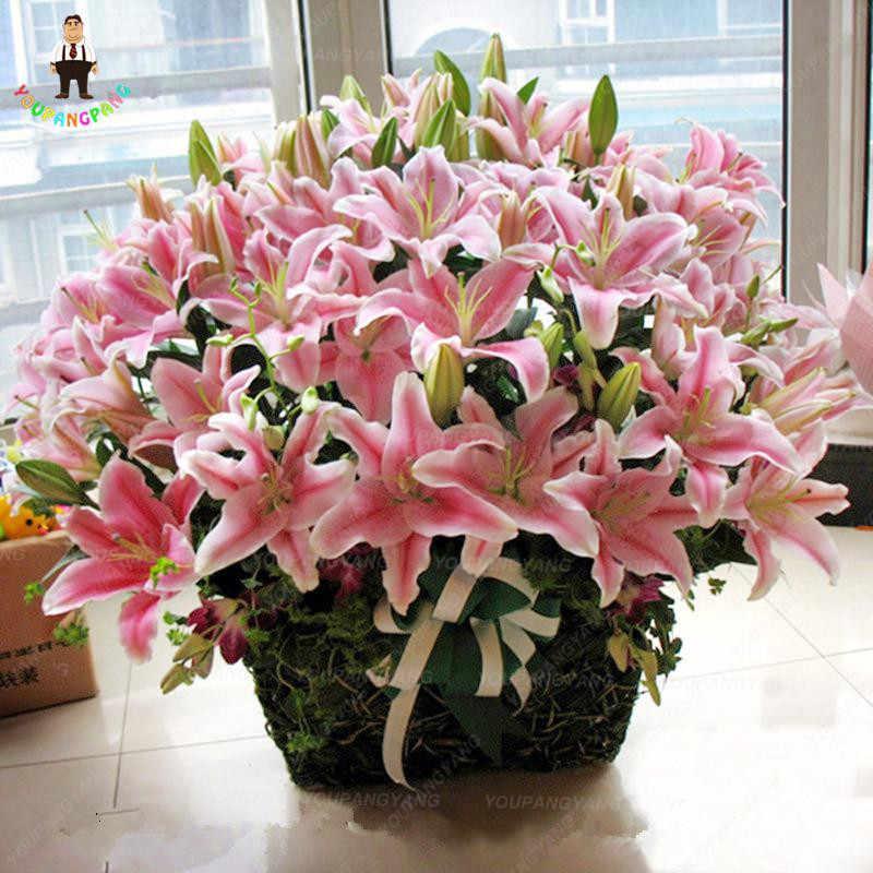 Giglio bonsai piante Giallo Bianco Rosso Rosa Viola Del Fiore Del Giglio bonsai di Piante Da Giardino-Miscelazione diverse varietà 200 pz