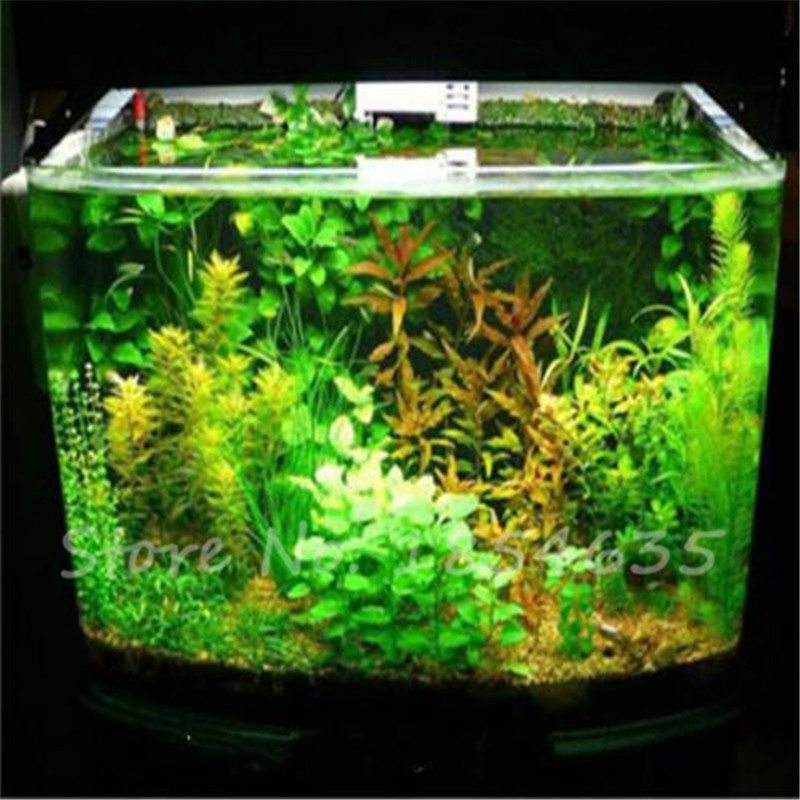 Aquarium Water Garden Reviews Online Shopping Aquarium Water