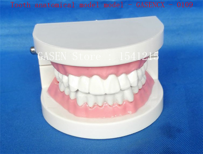 Oral care model Tooth model Teaching model Medical teaching aids Tooth anatomical model model - GASENCX - 0109 42cm male 13 torso model torso anatomical model of medical biological teaching aids equipment