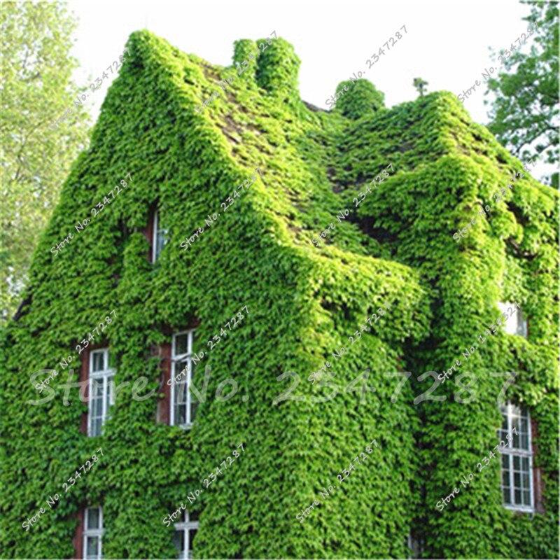Delicate  Ivy Leaf Garland Plant Vine  Foliage Parties Decor Supplies  50pcs