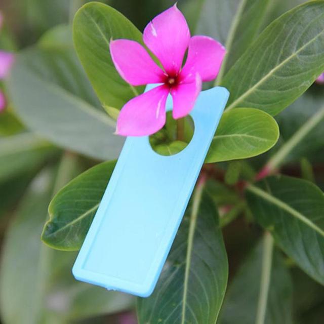 100pcs Grape Plastic Labels Melon Fruit Tags Plants Grape Sign Card Mark Plants Labels Orchard Garden Decoration