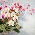 100% Шелковый Шарф Женщин Шарф Бабочки Орхидеи Шелковый Платок 2017 дизайнер Шелковый Шарф Пашмины Длинный Толстый Шелковый Wrap Люкс Леди подарок