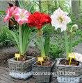 Амариллис семена, бесплатная доставка дешевые семена Амариллис, барбадос лили горшечные семена, бонсай балкон цветок-200 шт./пакет