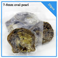20pcs 7-8mm freshwater oval pearl in oyster with vacuum-packed