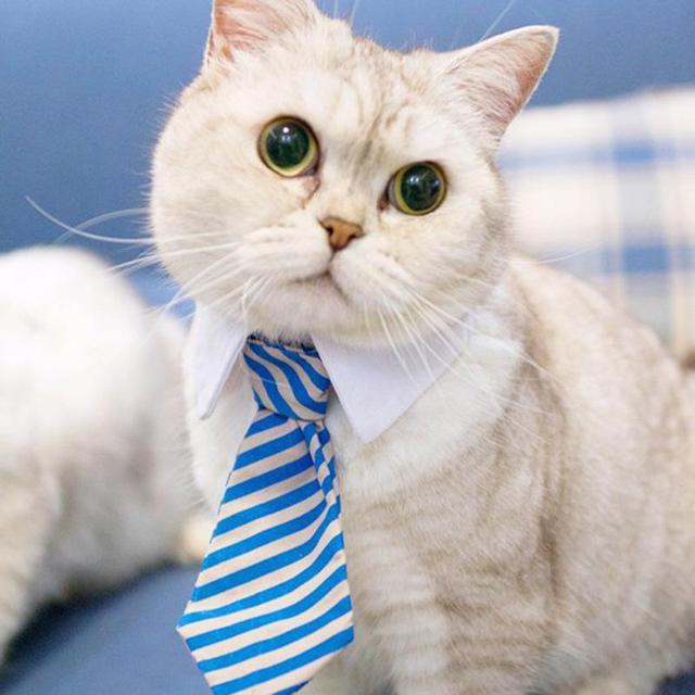 Asian cat collar