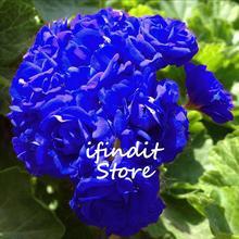 5pcs Blue GERANIUM Bonsai Multicolor Rare Bonsai Flower Perennial Plant Pelargonium Peltatum Indoor Balcony For Home & Garden