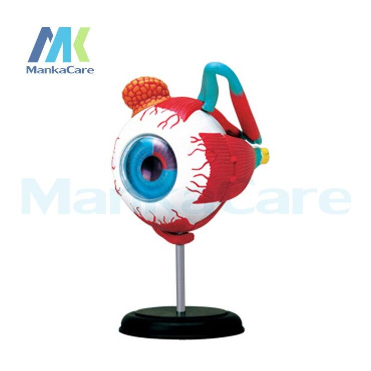 4D Master eye modèle 32 pièces assemblé anatomie humaine nouvelle structure 3D puzzle corps humain