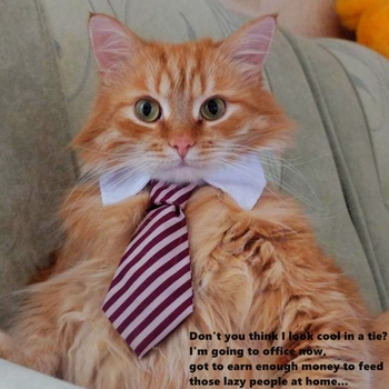 The Fancy Cat Tie