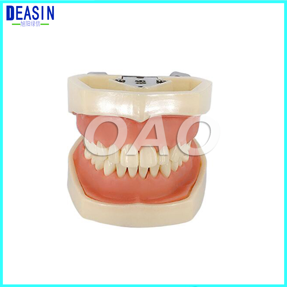 Deasin Dental All Removable Teeth Model 28 pcs New Dental Teeth Model for Dental Practice use teeth orthodontic model ceramic braces wrong jaw demonstration model orthodontics practice model