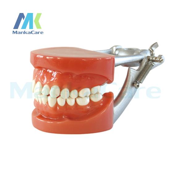 Manka Cuidar-Modelo Padrão/28 pcs Dente/Goma Dura/Cera fixo/DP Articulador Oral Modelo Modelo de Dente dentes