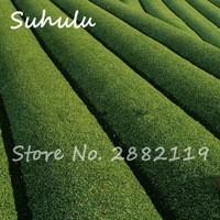 Free-Shipping-10Pcs-Bag-Chinese-Green-Tea-Tree-Seeds-Bonsai-Refreshing-Plants-for-Healthy-Bonsai-Tea.jpg_200x200