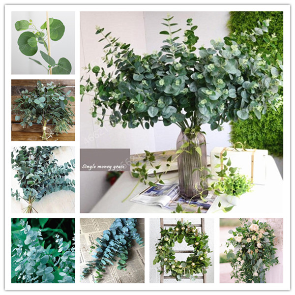 100 PCS Mexican Giant Eucalyptus Tree Garden Novel Plant Courtyard Woody Plants, Pest Control, Tropical Tree For Flower Pot