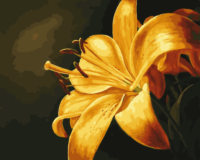 Oil Painting Home Decor Craft Diy Hand Painted By Numbers Drawing ColoringYellow Lily Flower By Number