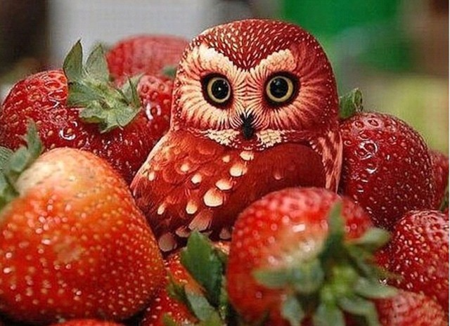 Diamond mosaic full diamond embroidery beads Fruits Owl Strawberry Animal diamond cross stitch animal Square diamond sets