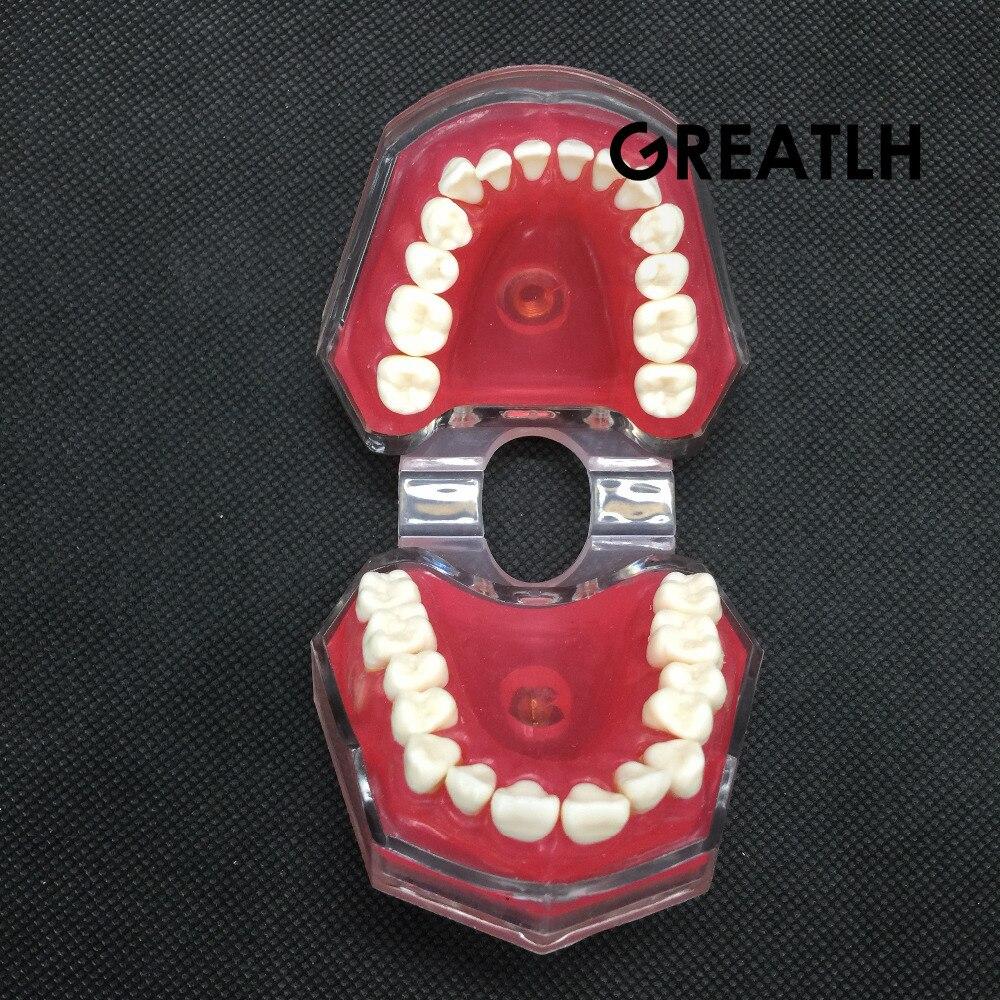 dental com dentes padrao removiveis 4004 01 estudo 06