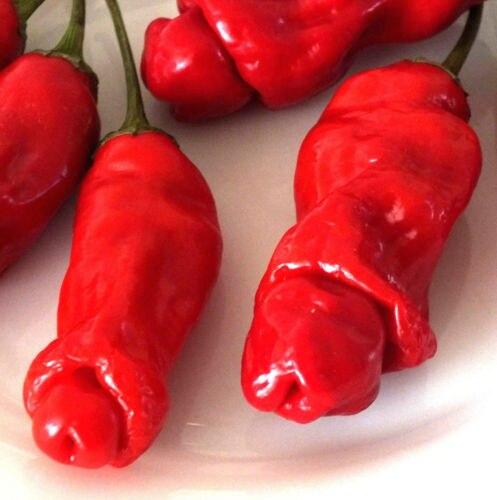 pene pepper