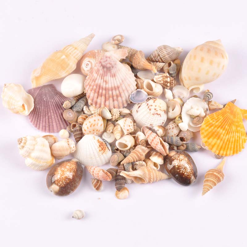 50g/lot Mixed Natural Shell Scrapbooking Craft Seashells For Glass Bottle Home Diy Decoration TRS0291