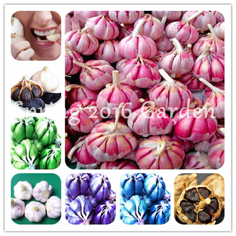 100Pcs Pink Garlic Bonsai Mix Healthy Bonsai Diy Plant Rare Onion Garlics Vegetable Bonsai Very Easy To Grow For Home Garden