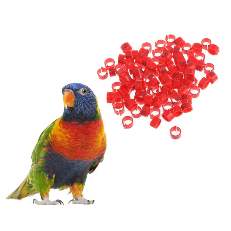 100 Pcs 8mm Carrier font b Supplies b font Leg Number Pigeon Training Bird Identify Ring