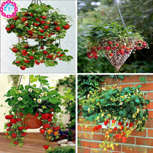 Фотография 300pcs/bag strawberry seeds giant strawberry Organic fruit seeds vegetables Non-GMO bonsai pot for home garden plant seeds