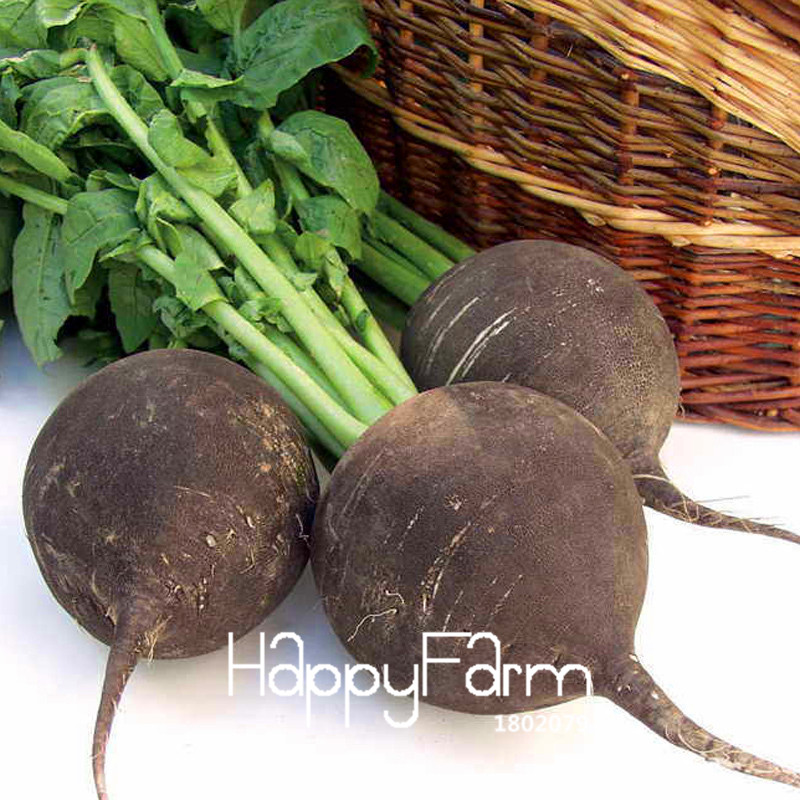 Hot Sale!50 PCS Garden plant Green Organic Vegetables, BLACK SPANISH ROUND RADISH Seeds Vegetable Seeds,#Z5E1OY