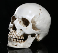 Resin Skulls Ornaments Mini Skull Crafts Individual Decoration Office Decoration