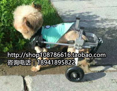 Wheelchair Dog Brown Leather Dining Chairs For Sale Pet Scooter Paralyzed Hind Leg Disabled Cart