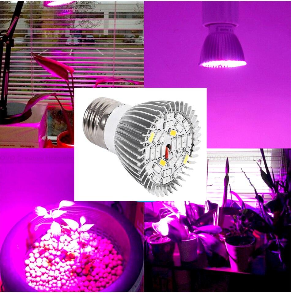 lâmpadas fito fitoampy lâmpada para plantas de