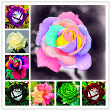 200 Pcs/Lot Colorful Rose Flower Semilla 25 Kinds of Color Rare Rose Bonsai Plants Potted for Home Garden Decoration Supplies pure natural 15 kinds of plants rose extract toner replenishment moisturizing beauty salon witening 1kg