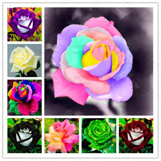 200 قطعة/الوحدة الملونة روز زهرة Semilla 25 أنواع من اللون نادر روز بونساي النباتات بوعاء ل ديكور حديقة المنزل لوازم
